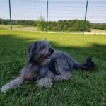 Pension canine Los Pelluts
